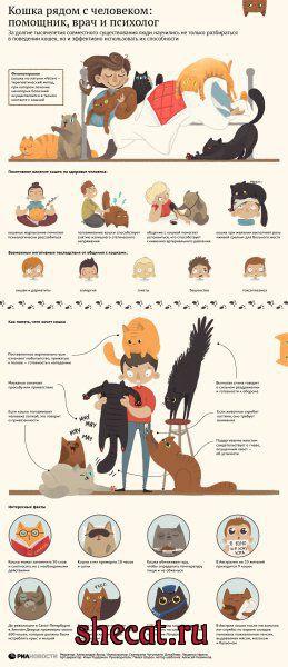 Кошка и здоровье человека