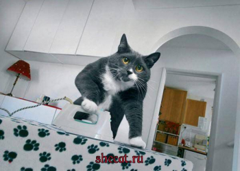 Кот гладит