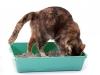 кошка на лоток