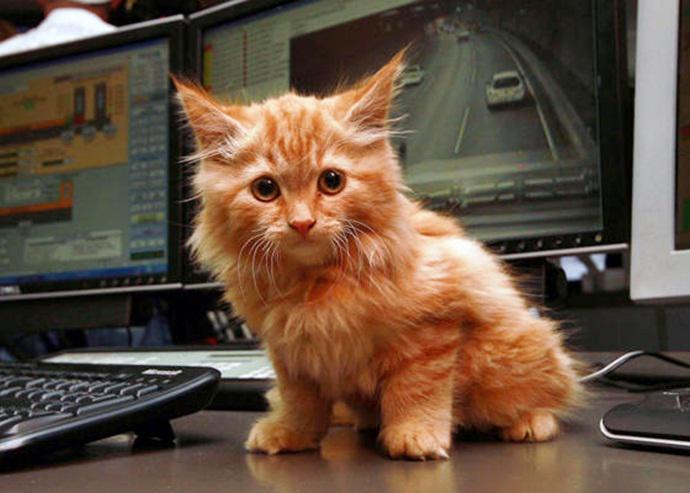 Спасенный котенок