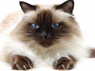 Агрессивный кот