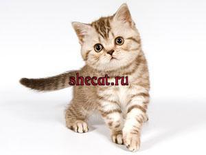 Котята 1.5 месяца - 3 месяца