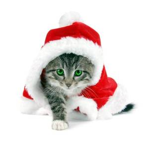 Новогодний котенок